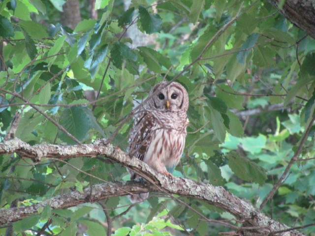 Owl on a branch in a tree