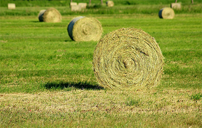 Bales of hay rolled up in a field